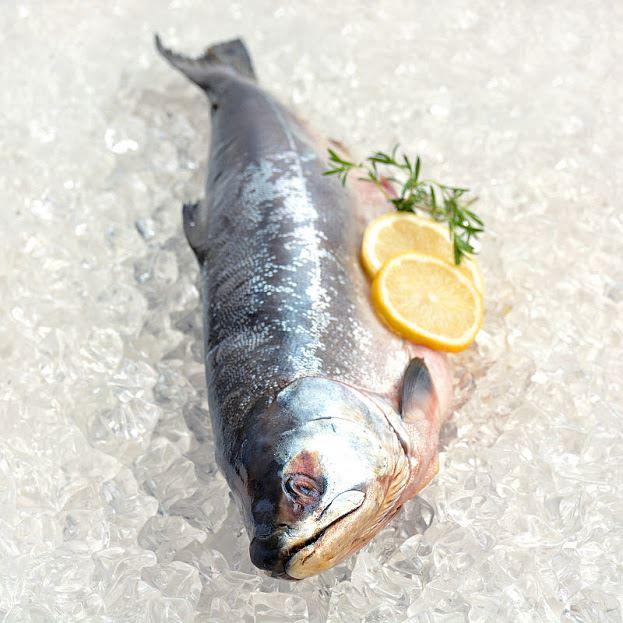 Celé ryby